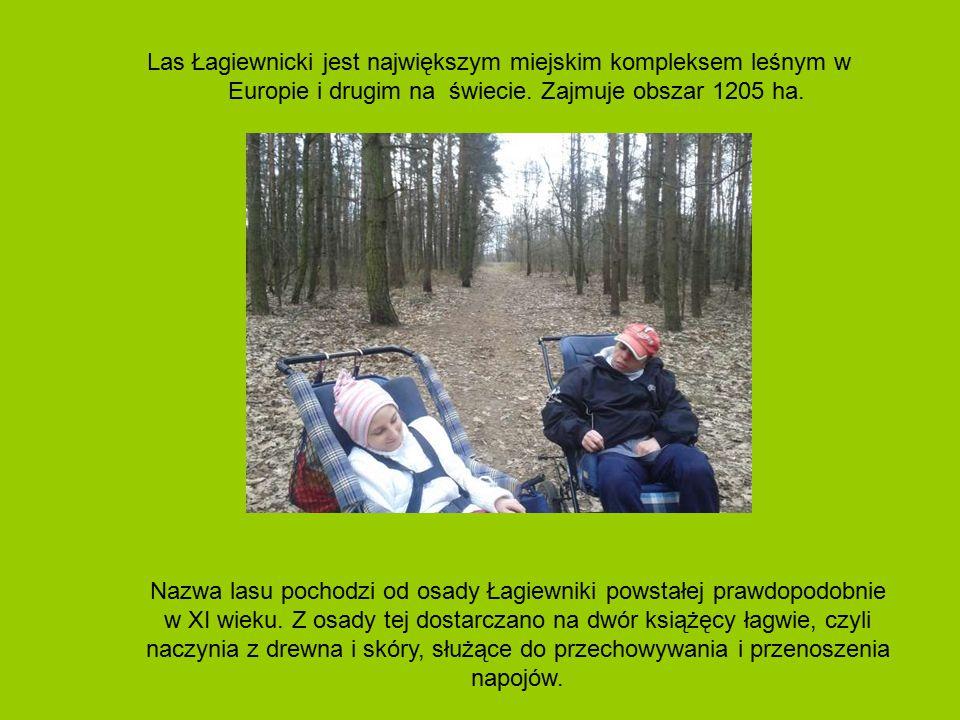 Las Łagiewnicki jest największym miejskim kompleksem leśnym w Europie i drugim na świecie. Zajmuje obszar 1205 ha.