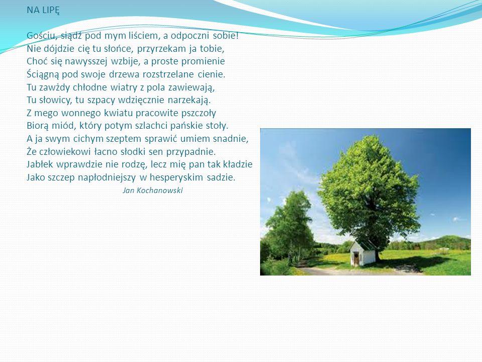 NA LIPĘ Gościu, siądź pod mym liściem, a odpoczni sobie