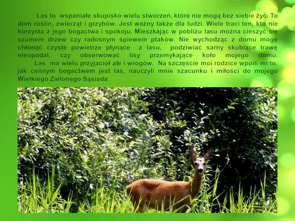 Las to wspaniałe skupisko wielu stworzeń, które nie mogą bez siebie żyć.