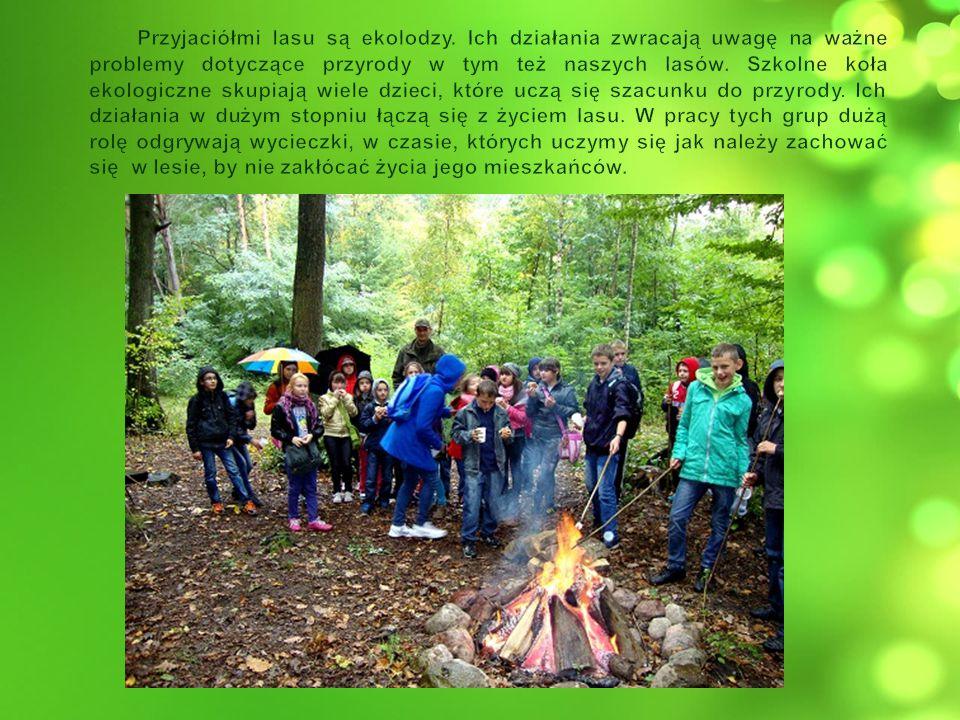 Przyjaciółmi lasu są ekolodzy