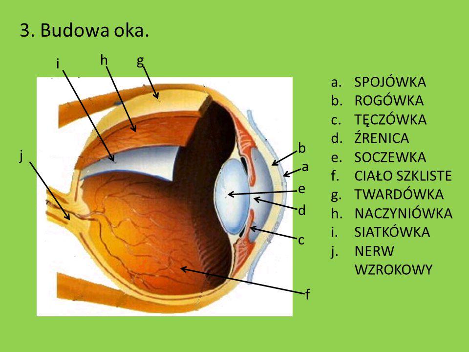 3. Budowa oka. h g i SPOJÓWKA ROGÓWKA TĘCZÓWKA ŹRENICA SOCZEWKA