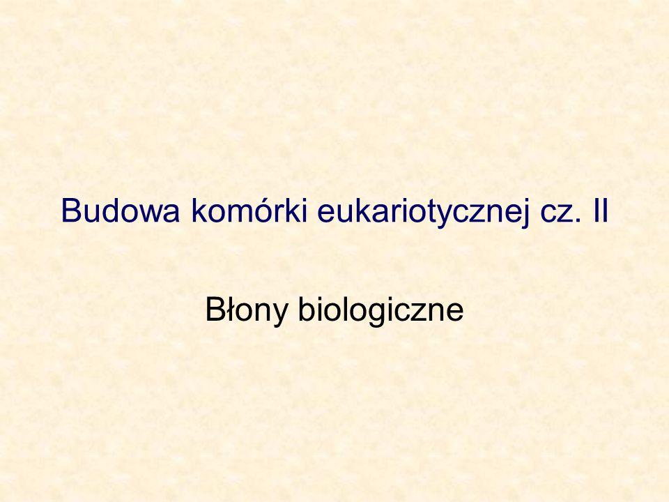 Budowa komórki eukariotycznej cz. II