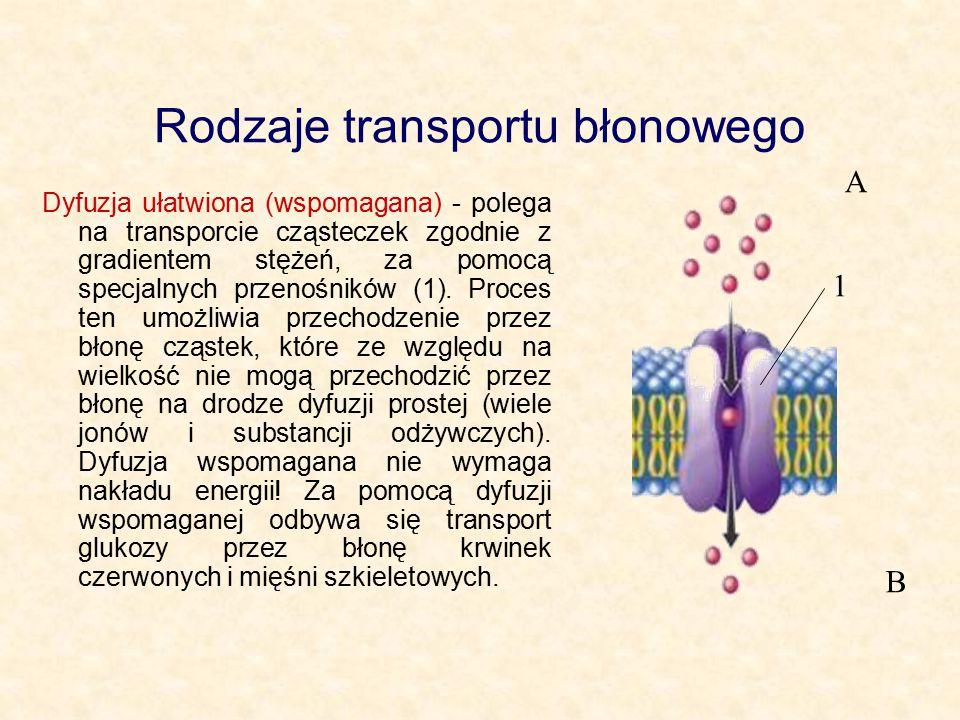 Rodzaje transportu błonowego