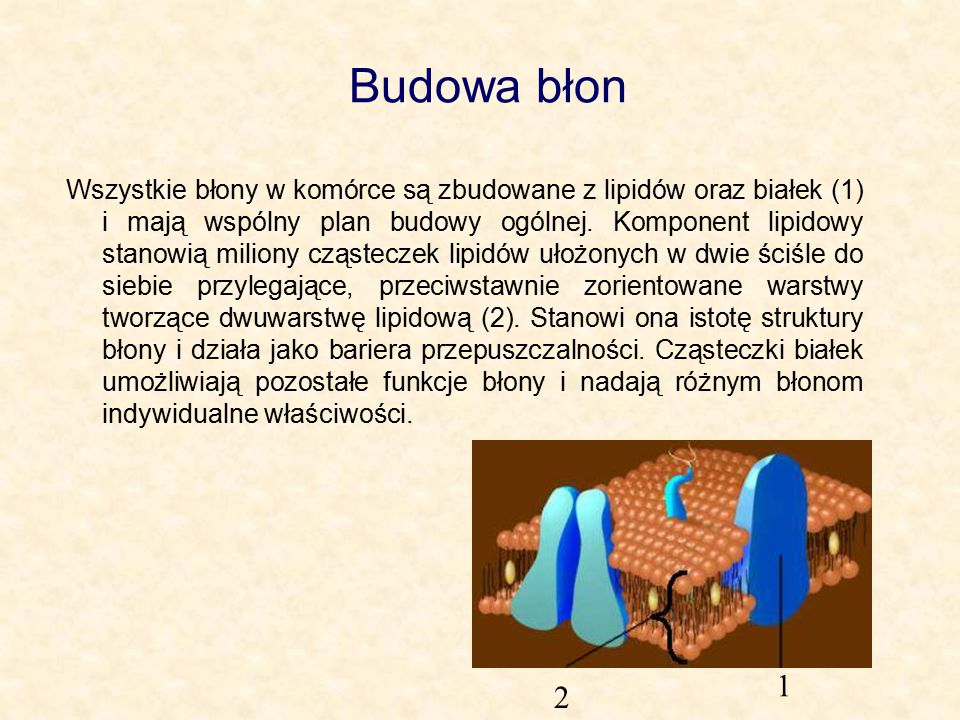 Budowa błon