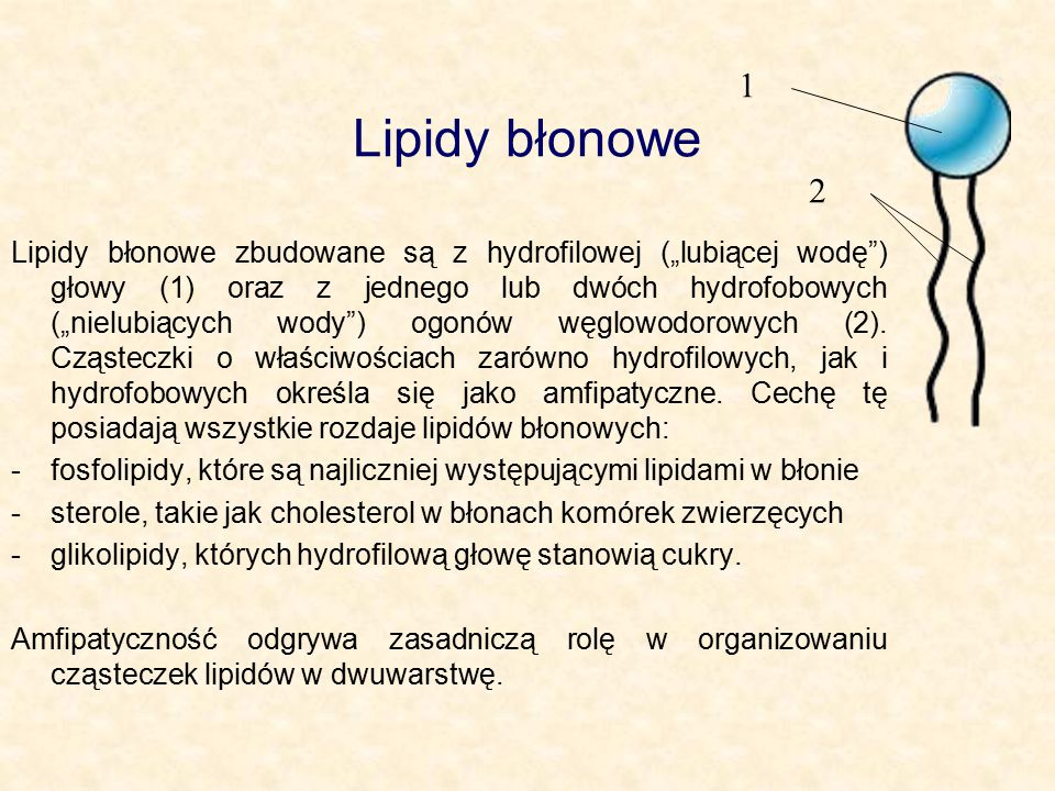 1 Lipidy błonowe. 2.