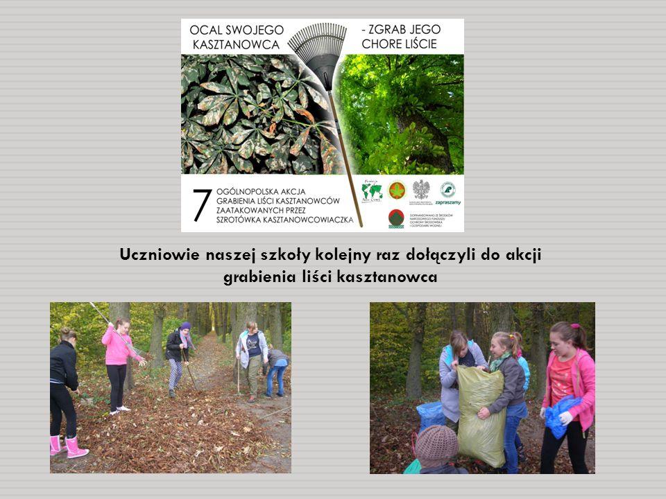 Uczniowie naszej szkoły kolejny raz dołączyli do akcji grabienia liści kasztanowca