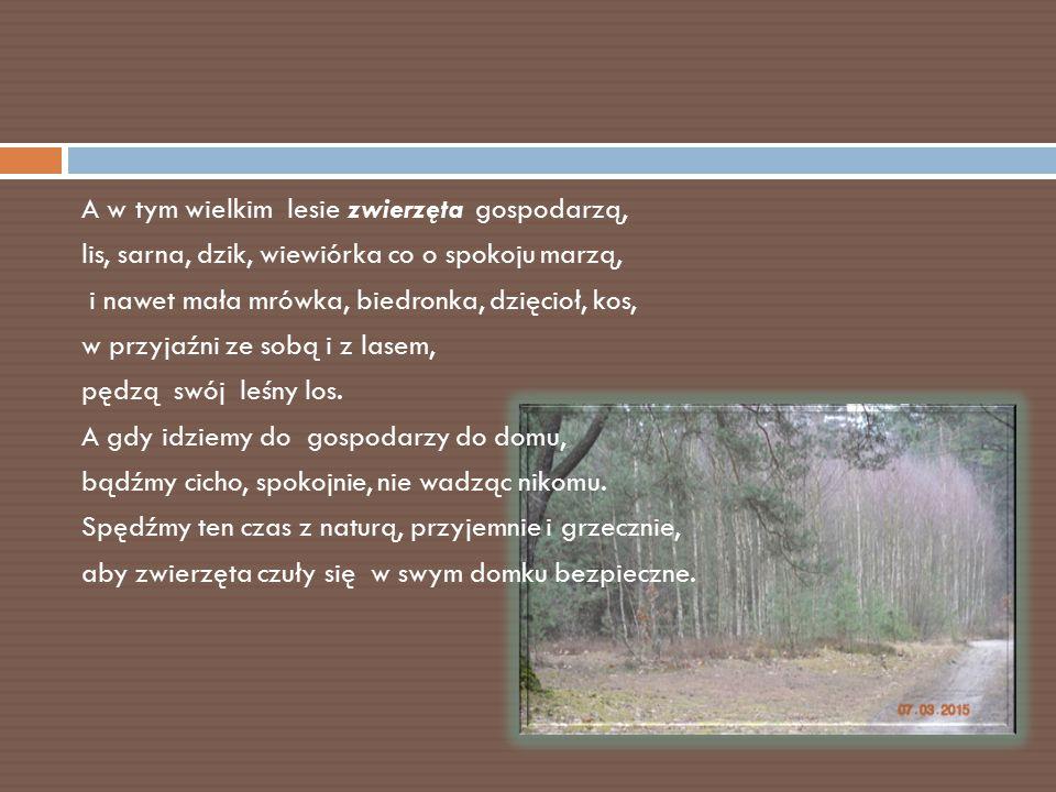 A w tym wielkim lesie zwierzęta gospodarzą, lis, sarna, dzik, wiewiórka co o spokoju marzą, i nawet mała mrówka, biedronka, dzięcioł, kos, w przyjaźni ze sobą i z lasem, pędzą swój leśny los.