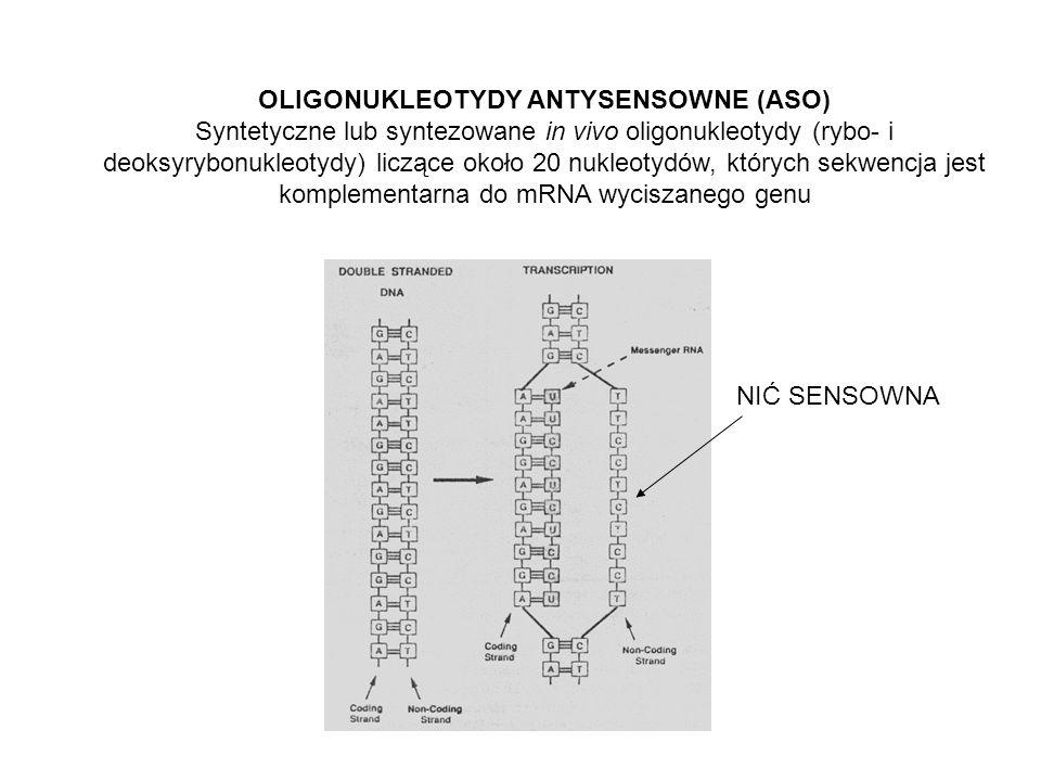 OLIGONUKLEOTYDY ANTYSENSOWNE (ASO)