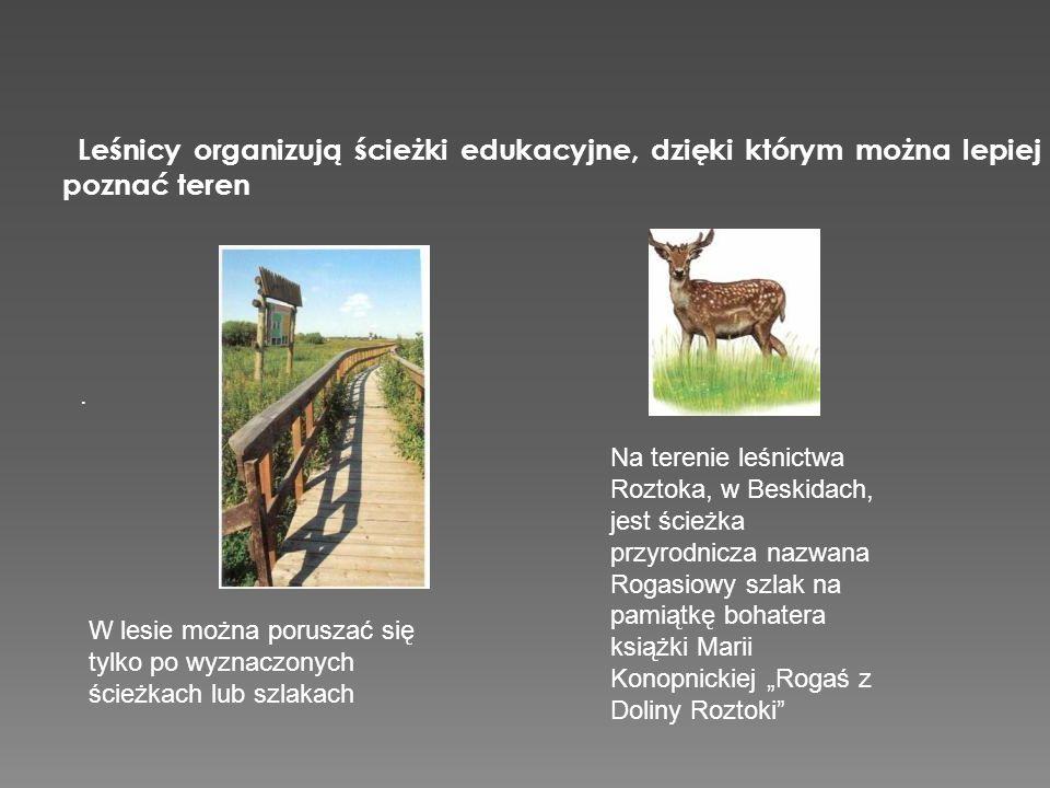 Leśnicy organizują ścieżki edukacyjne, dzięki którym można lepiej poznać teren