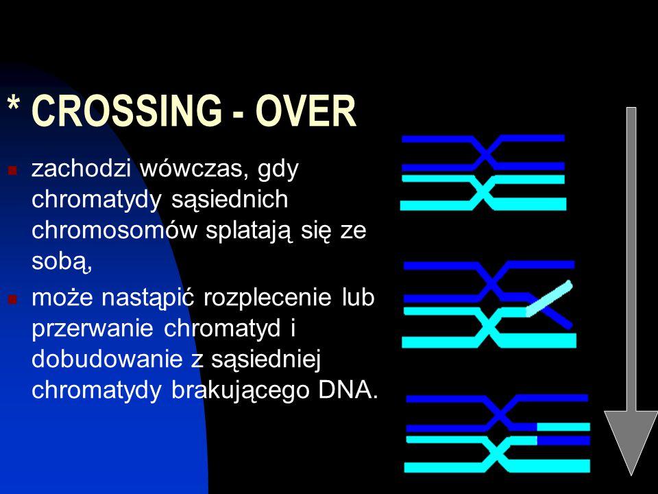 * CROSSING - OVER zachodzi wówczas, gdy chromatydy sąsiednich chromosomów splatają się ze sobą,