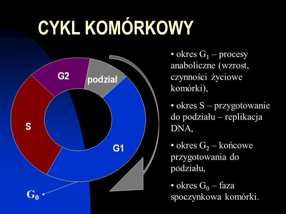 CYKL KOMÓRKOWY okres G1 – procesy anaboliczne (wzrost, czynności życiowe komórki), okres S – przygotowanie do podziału – replikacja DNA,