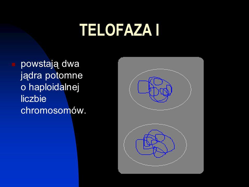 TELOFAZA I powstają dwa jądra potomne o haploidalnej liczbie chromosomów.