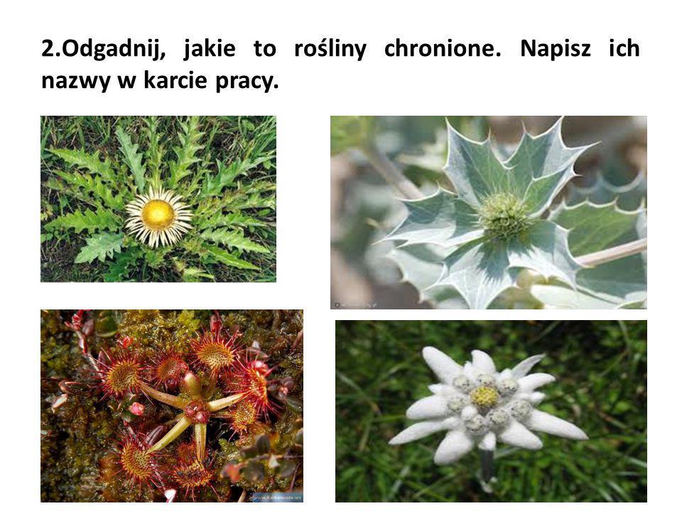2. Odgadnij, jakie to rośliny chronione