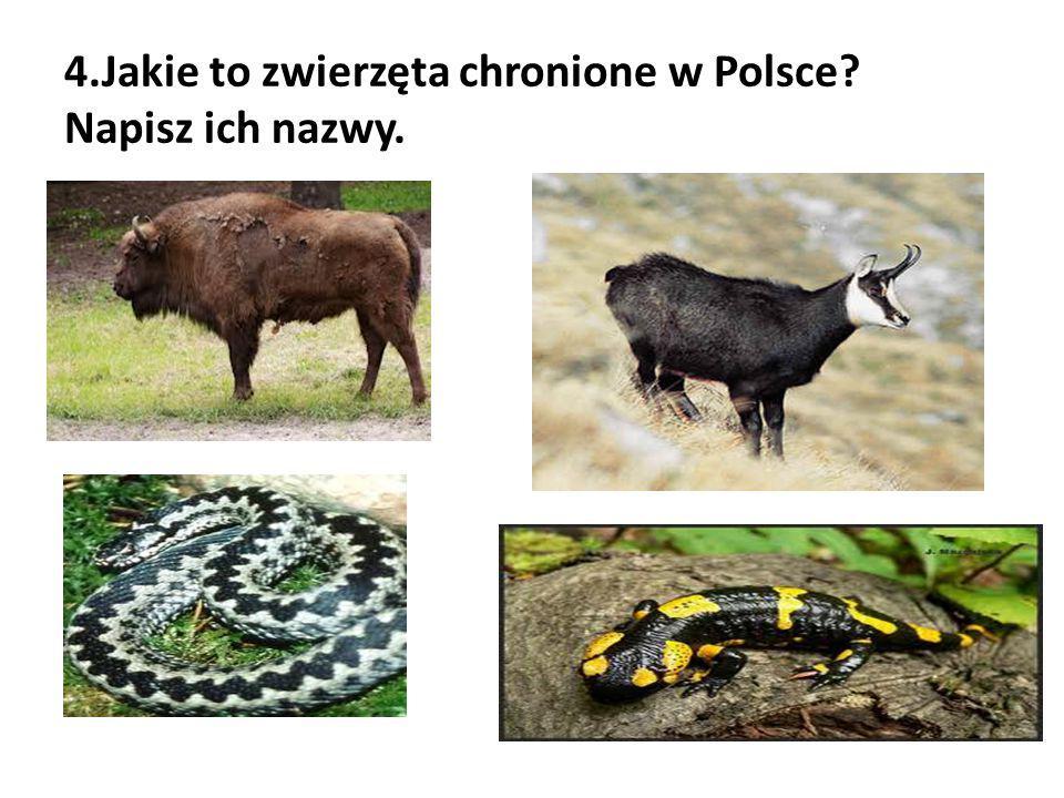 4.Jakie to zwierzęta chronione w Polsce Napisz ich nazwy.