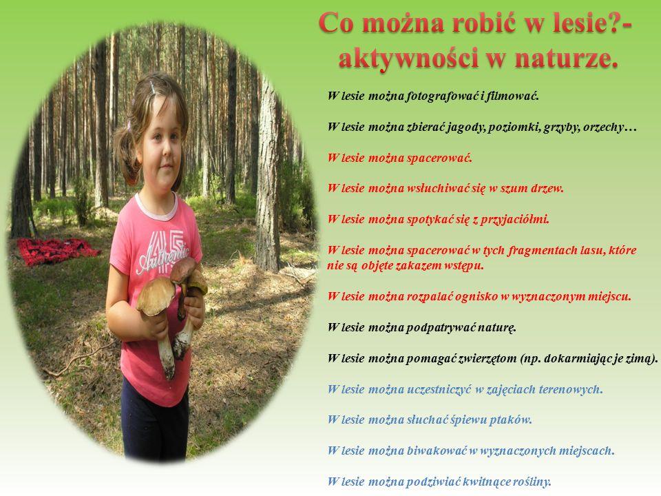 Co można robić w lesie - aktywności w naturze.