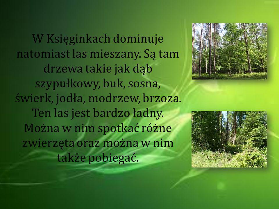 W Księginkach dominuje natomiast las mieszany
