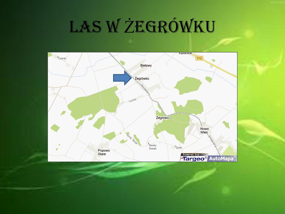 Las w Żegrówku