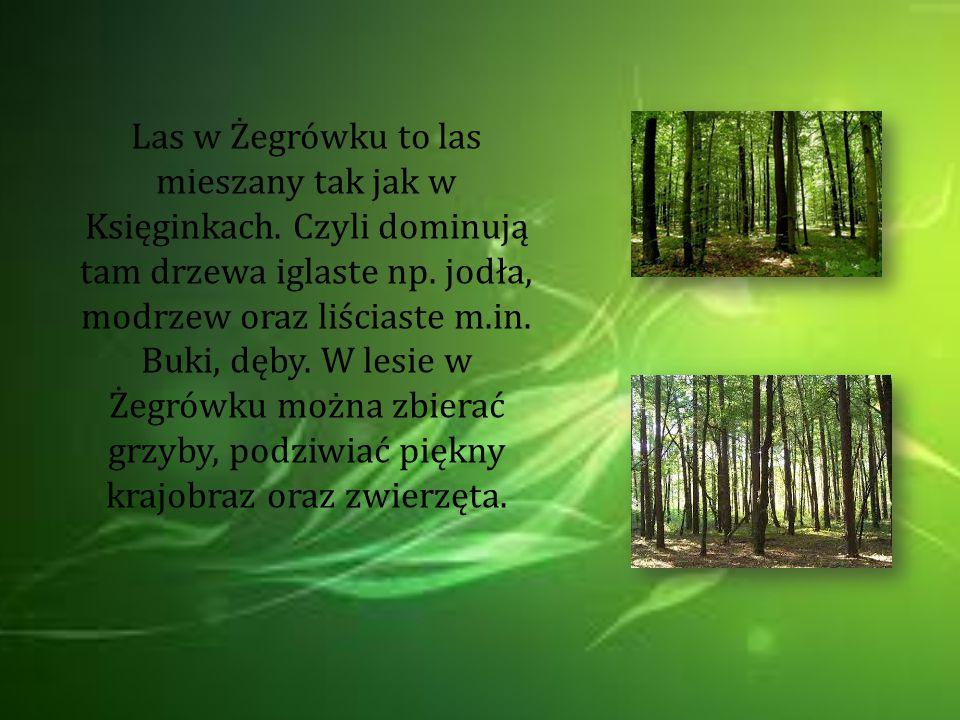 Las w Żegrówku to las mieszany tak jak w Księginkach