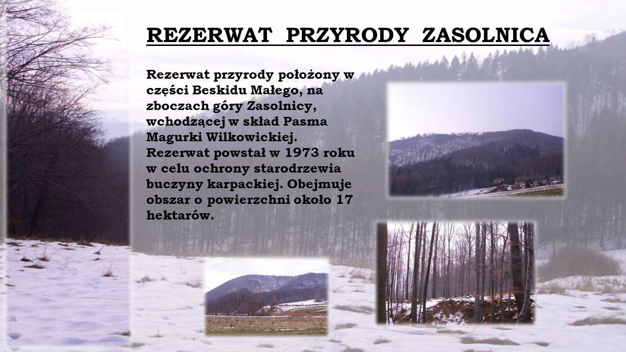 REZERWAT PRZYRODY ZASOLNICA