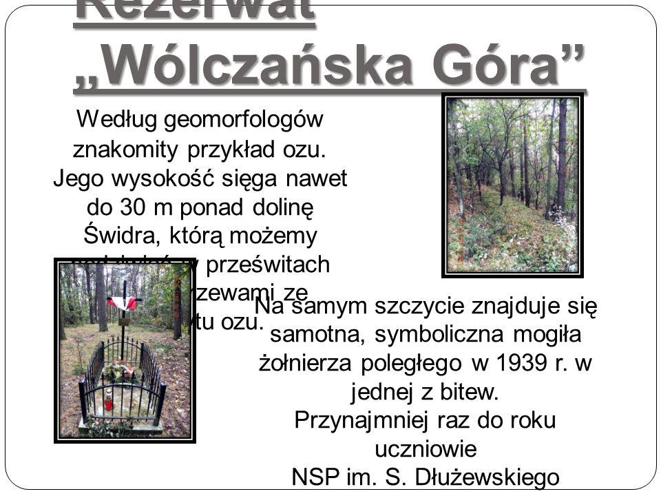 """Rezerwat """"Wólczańska Góra"""