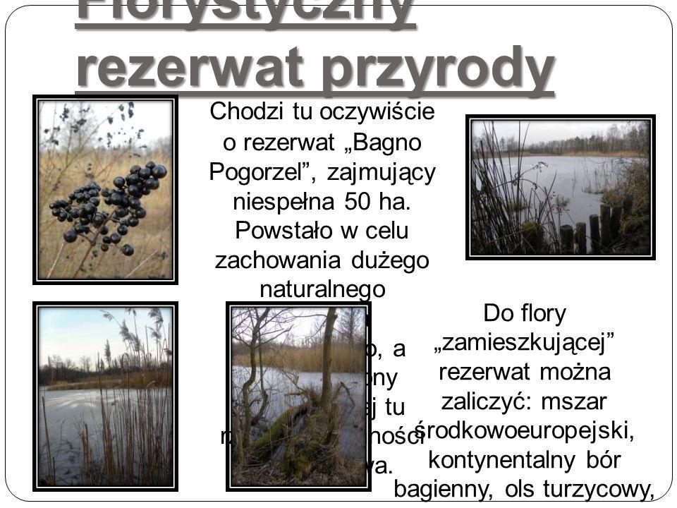 Florystyczny rezerwat przyrody