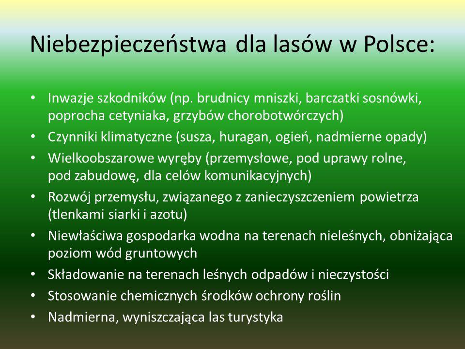 Niebezpieczeństwa dla lasów w Polsce: