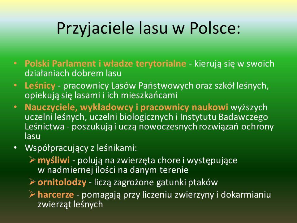 Przyjaciele lasu w Polsce: