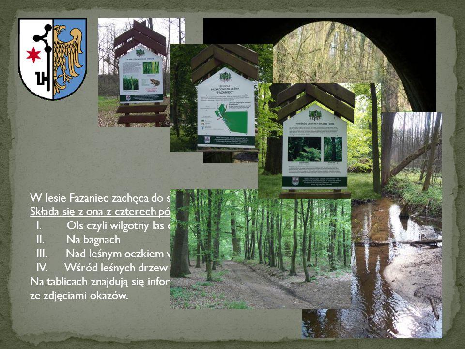 W lesie Fazaniec zachęca do spacerów ścieżka przyrodniczo-dydaktyczna.