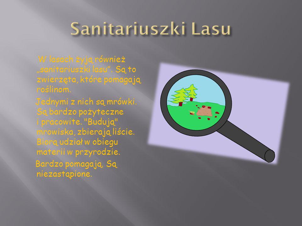 Sanitariuszki Lasu