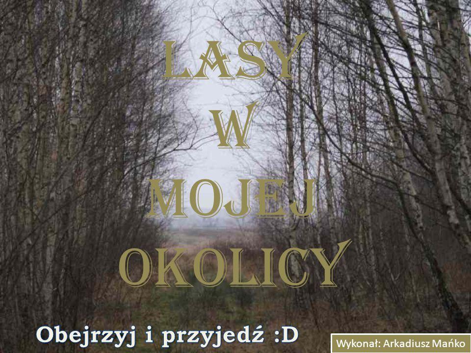 Lasy w mojej okolicy Obejrzyj i przyjedź :D Wykonał: Arkadiusz Mańko