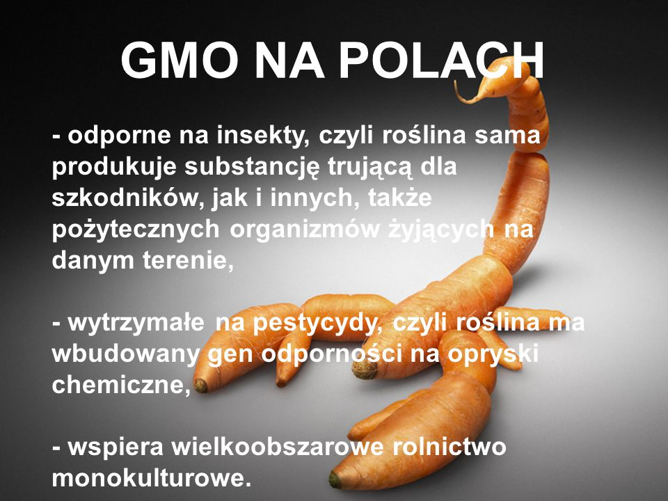 GMO NA POLACH
