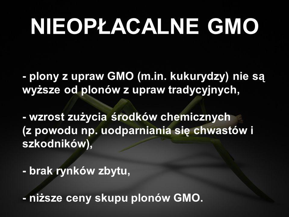 NIEOPŁACALNE GMO - plony z upraw GMO (m.in. kukurydzy) nie są wyższe od plonów z upraw tradycyjnych,