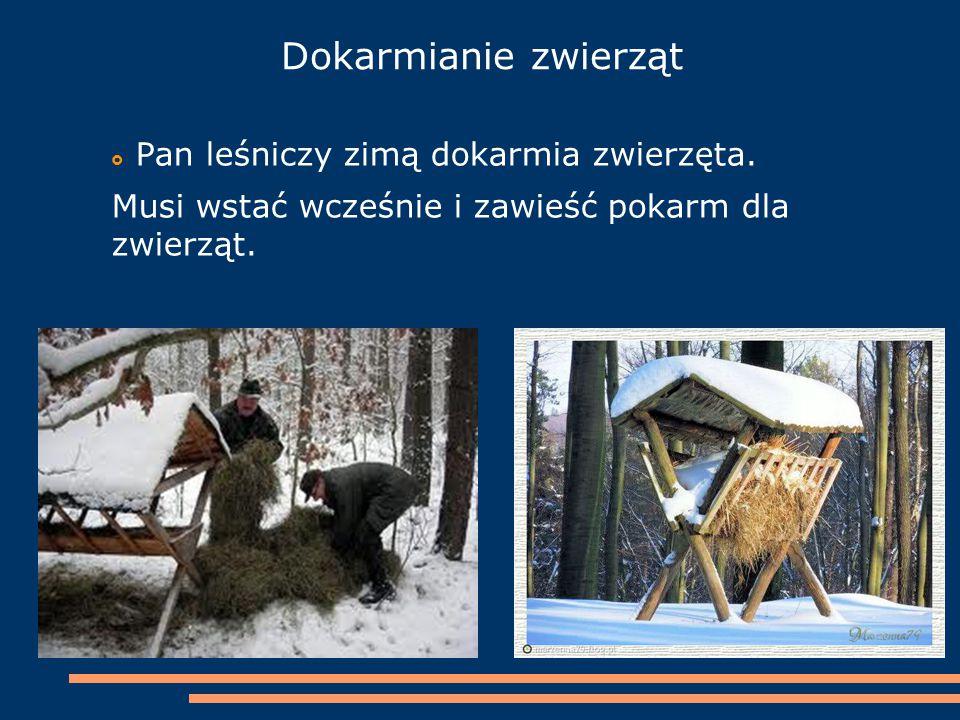 Dokarmianie zwierząt Pan leśniczy zimą dokarmia zwierzęta.