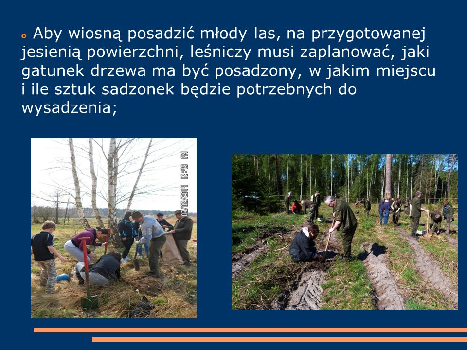 Aby wiosną posadzić młody las, na przygotowanej jesienią powierzchni, leśniczy musi zaplanować, jaki gatunek drzewa ma być posadzony, w jakim miejscu i ile sztuk sadzonek będzie potrzebnych do wysadzenia;