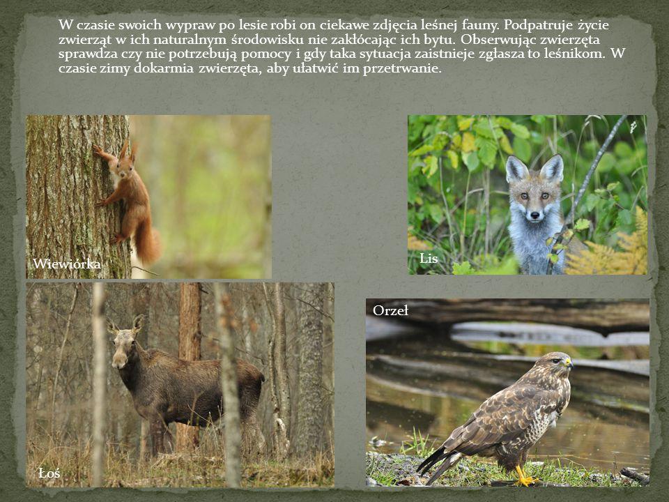 W czasie swoich wypraw po lesie robi on ciekawe zdjęcia leśnej fauny