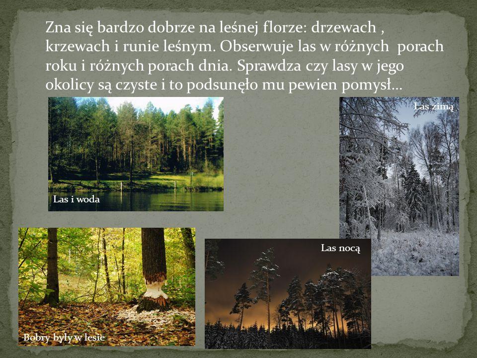 Zna się bardzo dobrze na leśnej florze: drzewach , krzewach i runie leśnym. Obserwuje las w różnych porach roku i różnych porach dnia. Sprawdza czy lasy w jego okolicy są czyste i to podsunęło mu pewien pomysł…