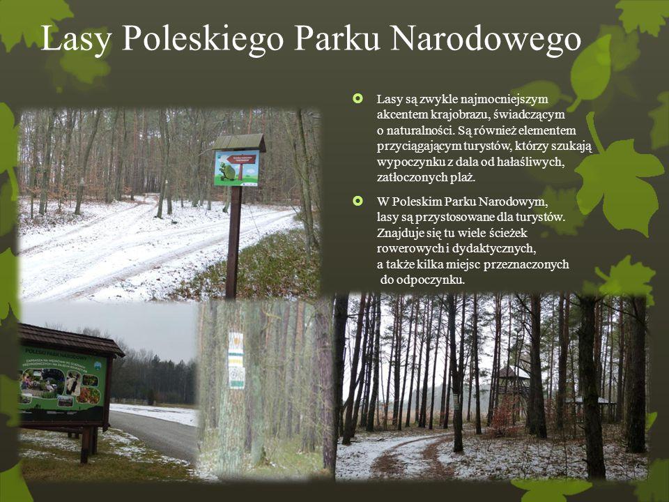 Lasy Poleskiego Parku Narodowego