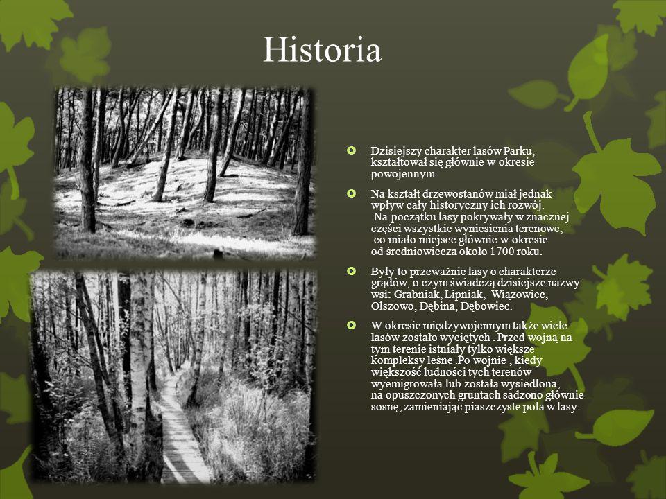 Historia Dzisiejszy charakter lasów Parku, kształtował się głównie w okresie powojennym.