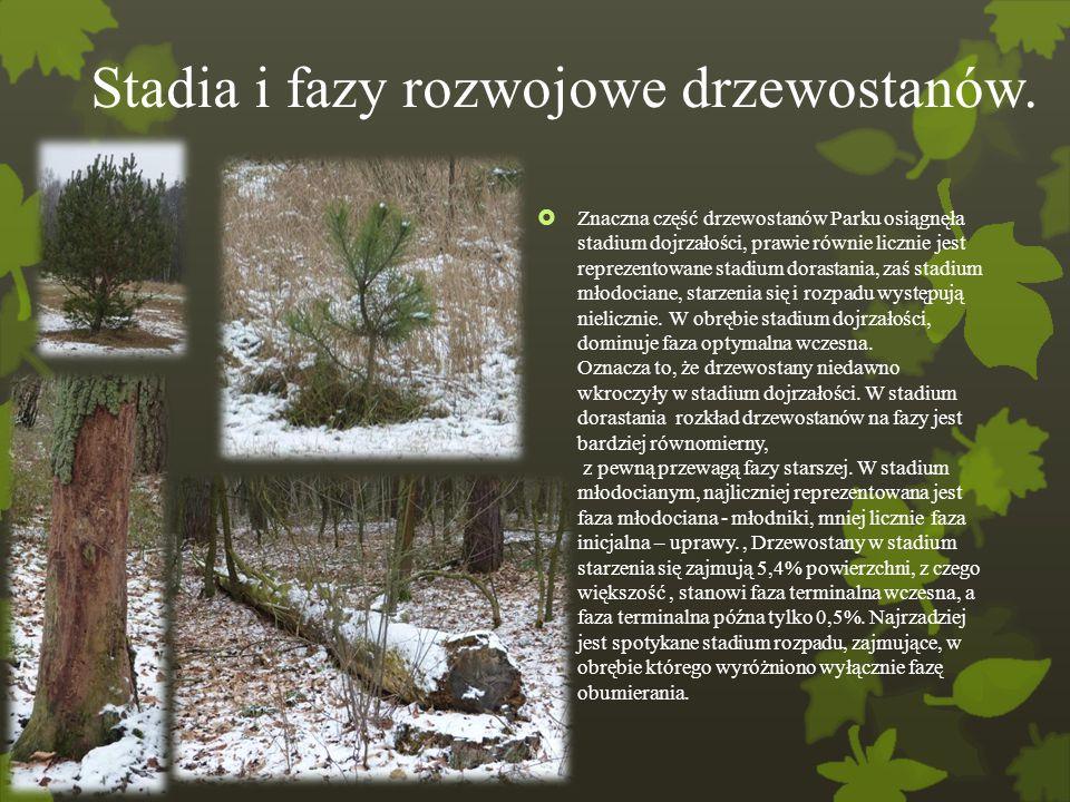 Stadia i fazy rozwojowe drzewostanów.