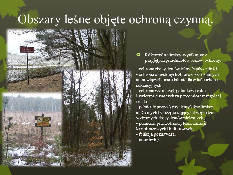 Obszary leśne objęte ochroną czynną.