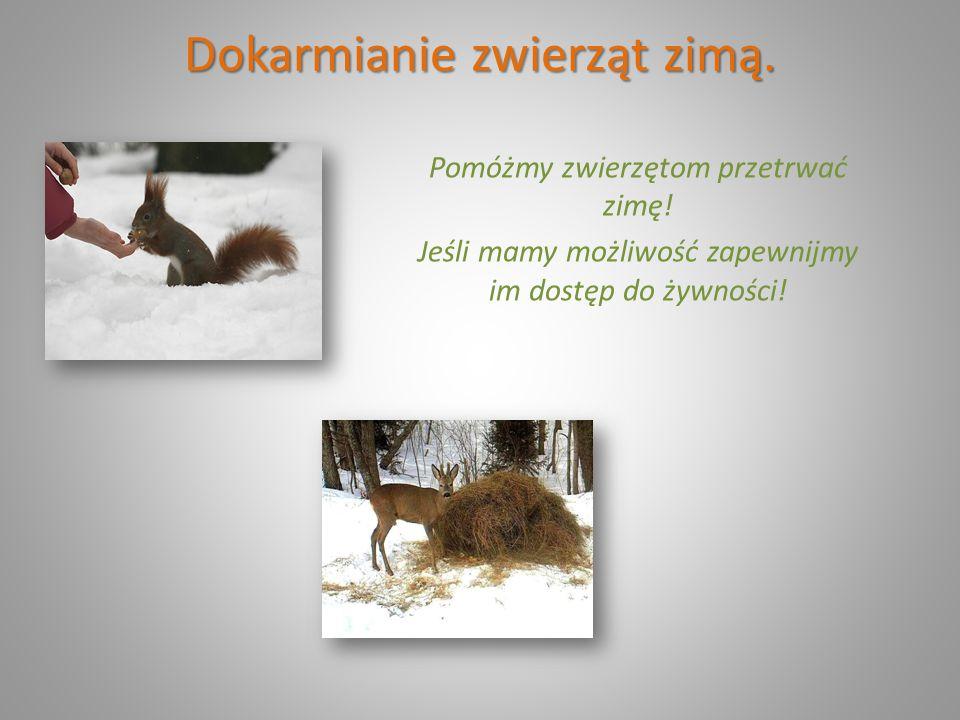 Dokarmianie zwierząt zimą.