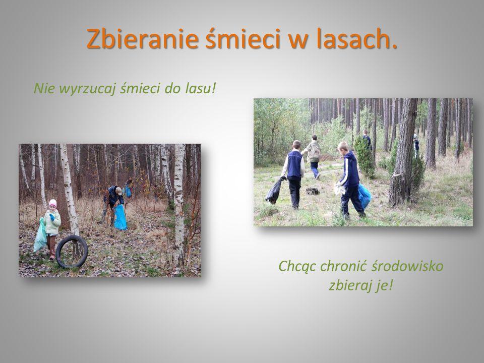 Zbieranie śmieci w lasach.