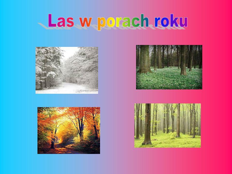 Las w porach roku