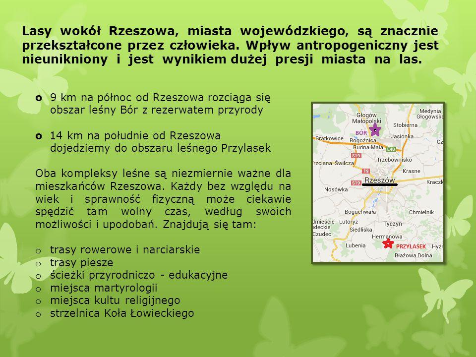 Lasy wokół Rzeszowa, miasta wojewódzkiego, są znacznie przekształcone przez człowieka. Wpływ antropogeniczny jest nieunikniony i jest wynikiem dużej presji miasta na las.