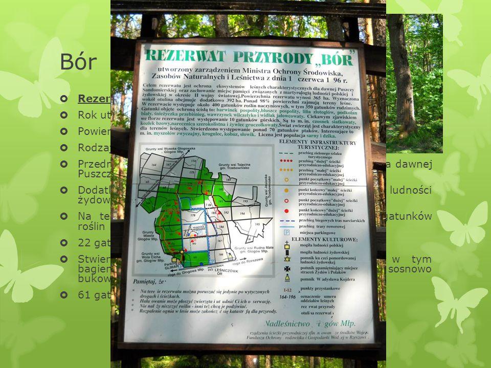 Bór Rezerwat Bór Rok utworzenia: 1996 Powierzchnia 369 ha