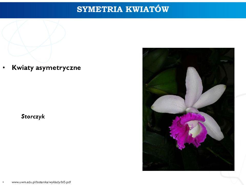 SYMETRIA KWIATÓW Kwiaty asymetryczne Storczyk