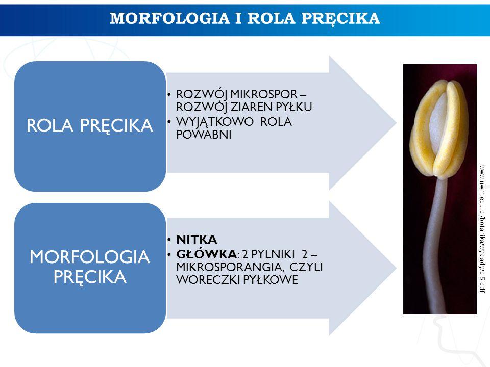 MORFOLOGIA I ROLA PRĘCIKA