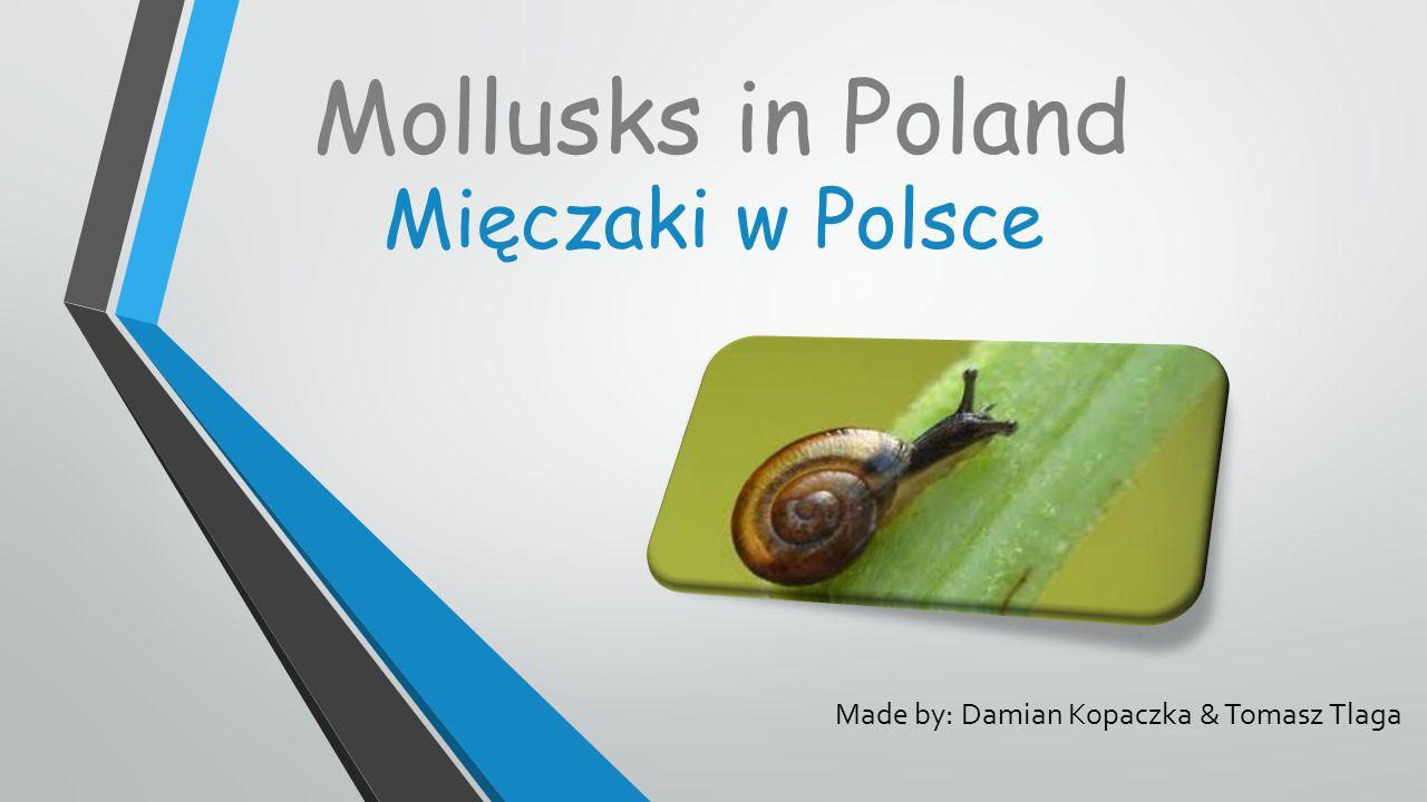 Made by: Damian Kopaczka & Tomasz Tlaga