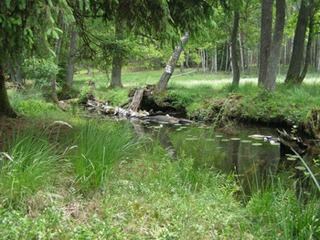 Struga siedmiu jezior