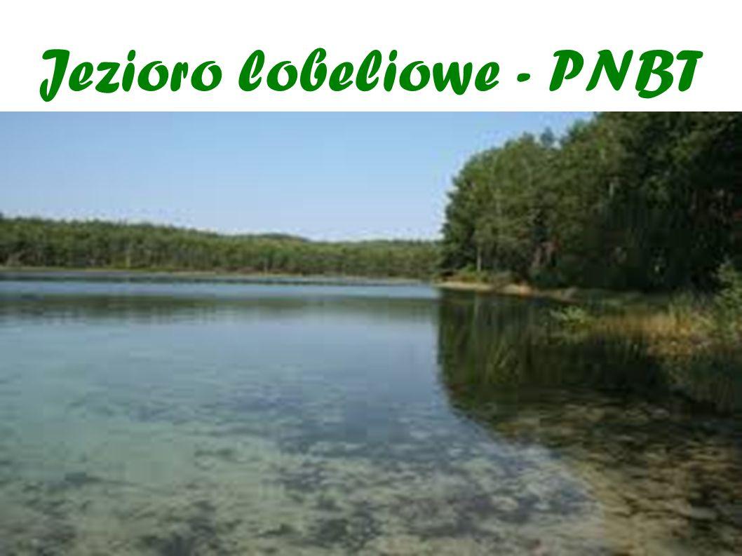 Jezioro lobeliowe - PNBT